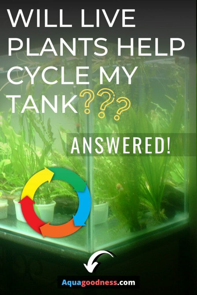 Will Live Plants Help Cycle My Tank? (Answered) text with fish tank image with plants