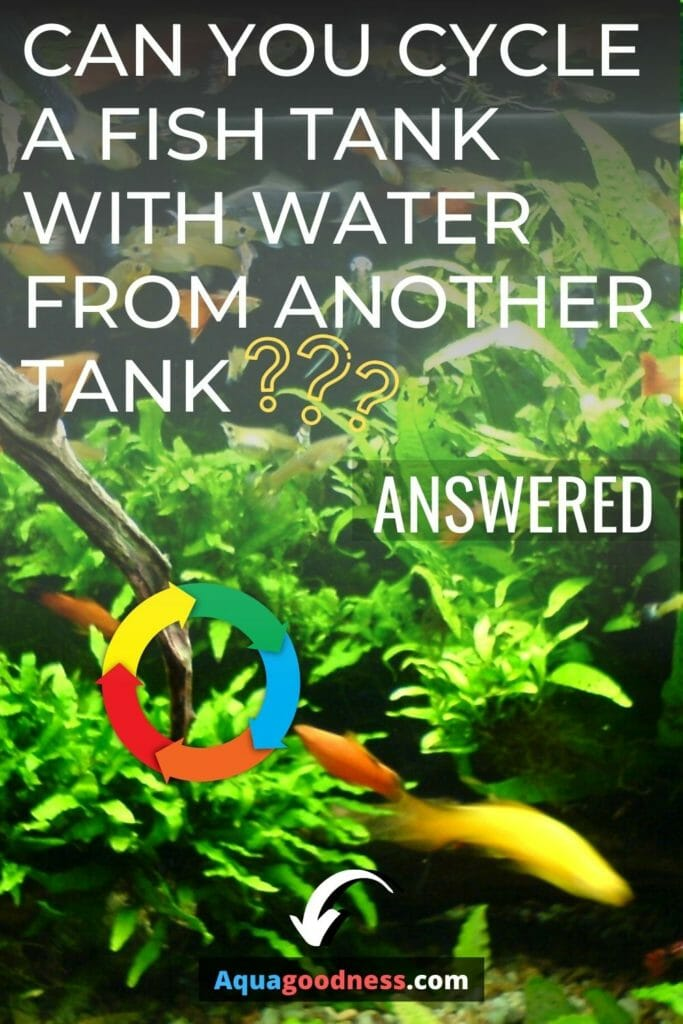 Can You Cycle a Fish Tank With Water From Another Tank? image