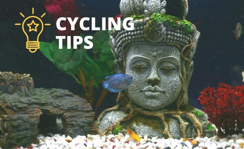 "planted fish tank with ""cycling tips"" text overlay"