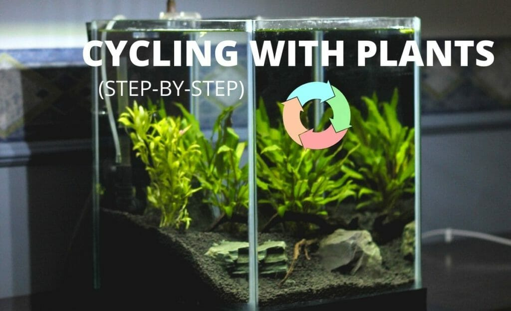 "planted fish tank with cycle diagram and text overlay ""cycling with plants"""