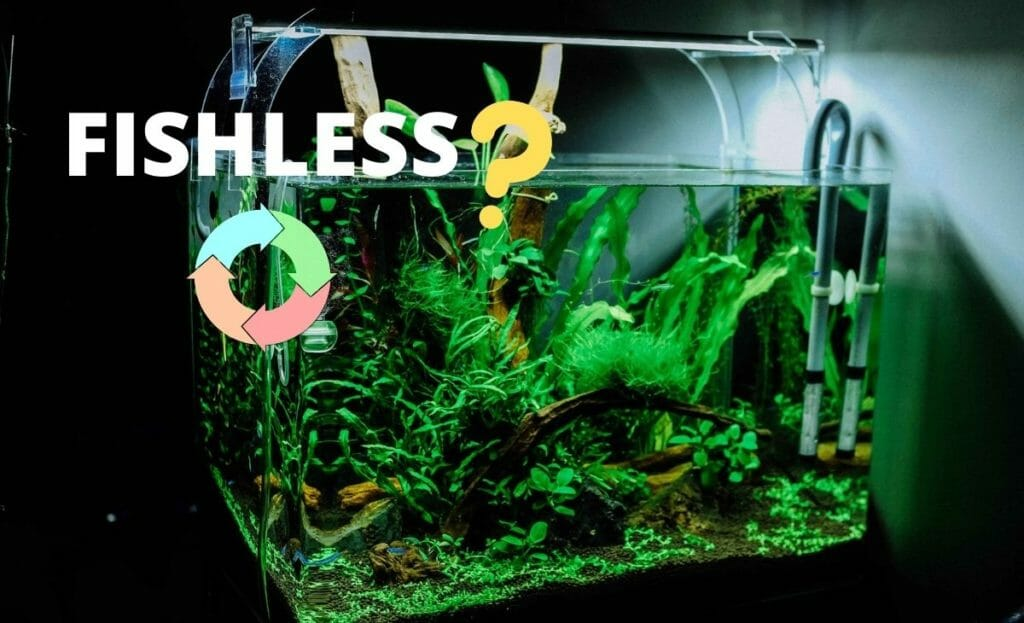 """fish tank image with text """"fishless"""" and question mark and cycle image"""