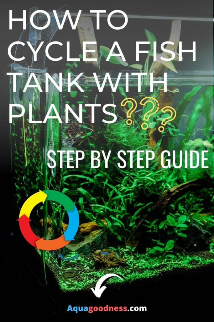 How to Cycle a Fish Tank With Plants? (Step by Step Guide) image