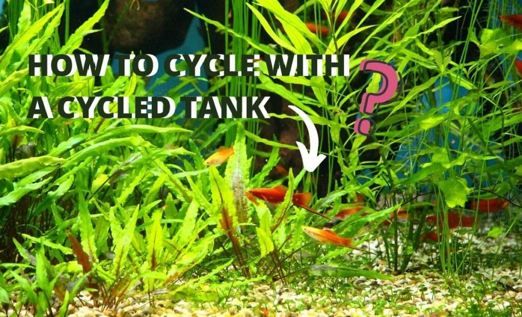"""fish tank image with text """"HOW TO CYCLE WITH A CYCLED TANK"""" and question mark"""
