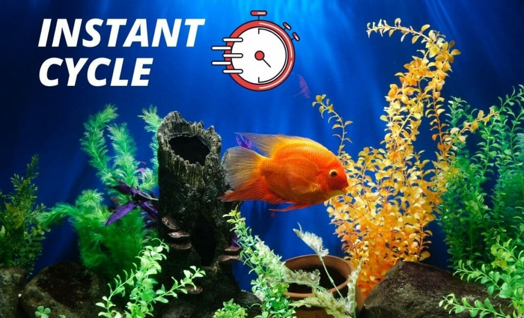 "planted fish tank with ""instant cycle"" text overly"