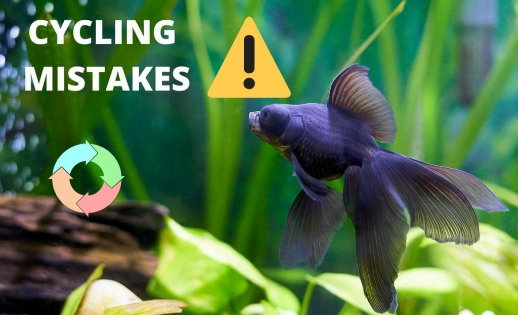 """fish tank with a fish an cycling diagram and test """"cycling mistakes"""""""