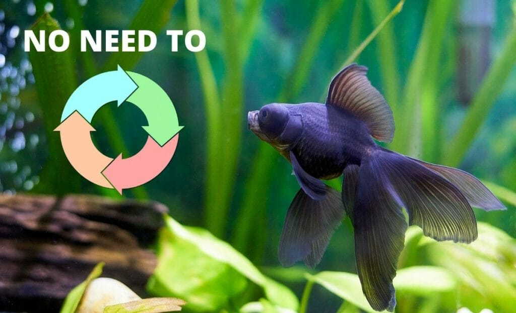 fish tank image with text no need to cycle