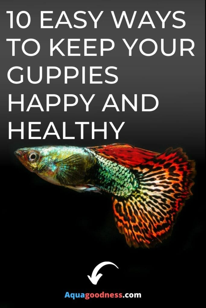 10 Easy Ways to Keep Your Guppies Happy and Healthy image