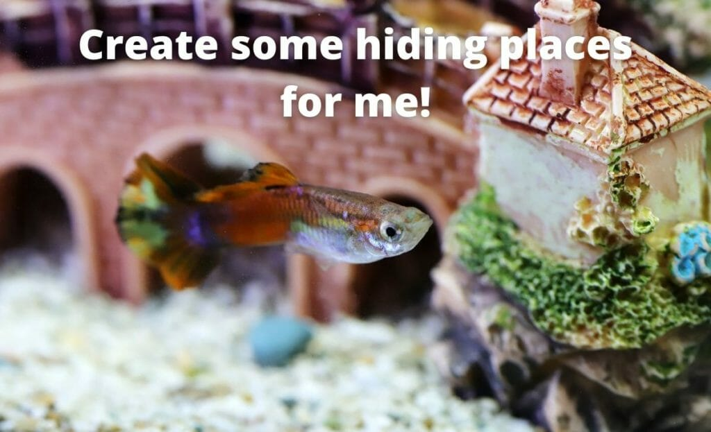 """guppy fish image with text overlay """"create some hiding places for me"""""""