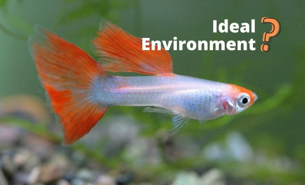 guppy image with test ideal environment and question mark