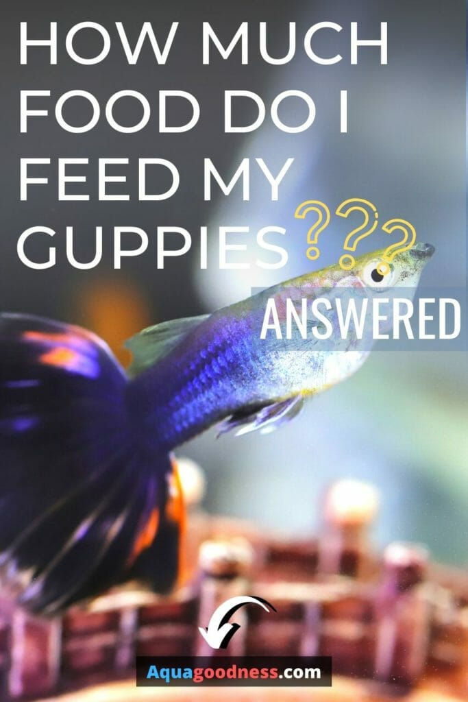 How Much Food Do I Feed My Guppies? (Answered) image